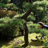名匠庵の庭