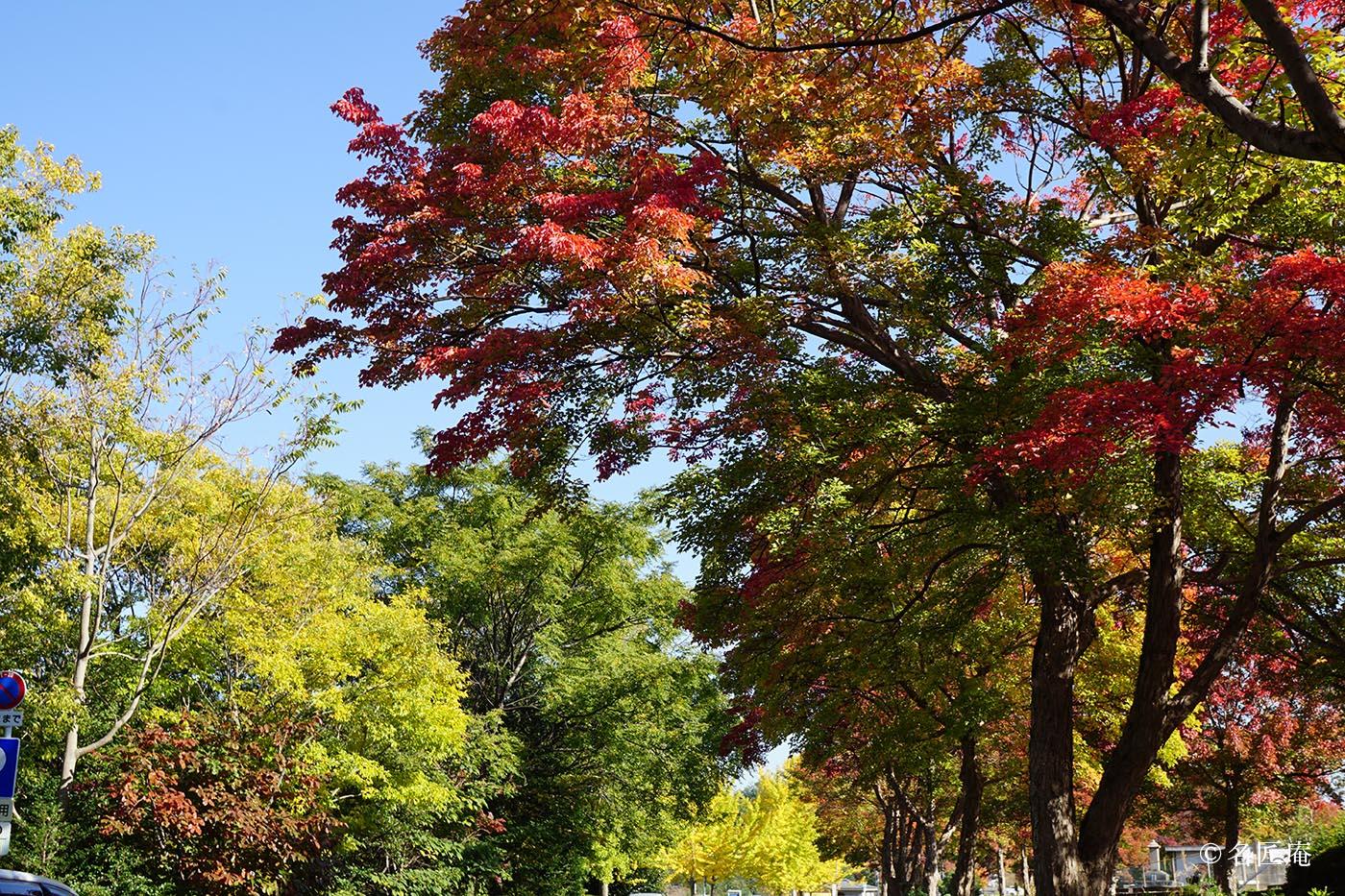 平和公園紅葉