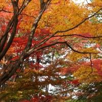 東山動植物園紅葉