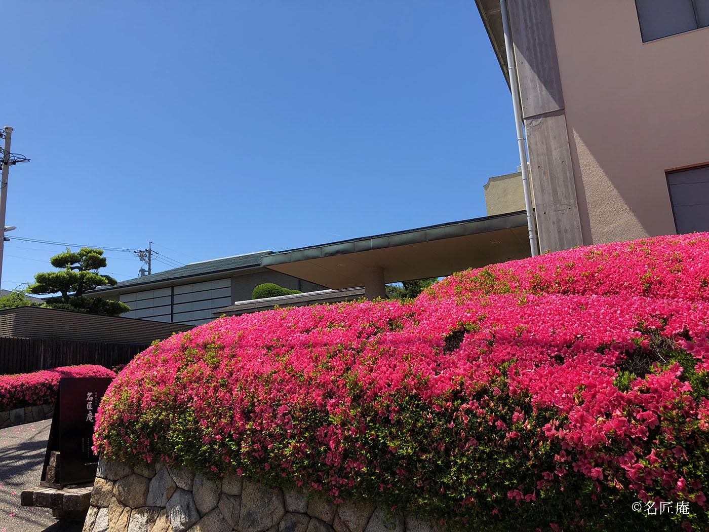 名匠庵のサツキの花