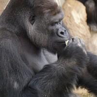 東山動植物園シャバーニ3