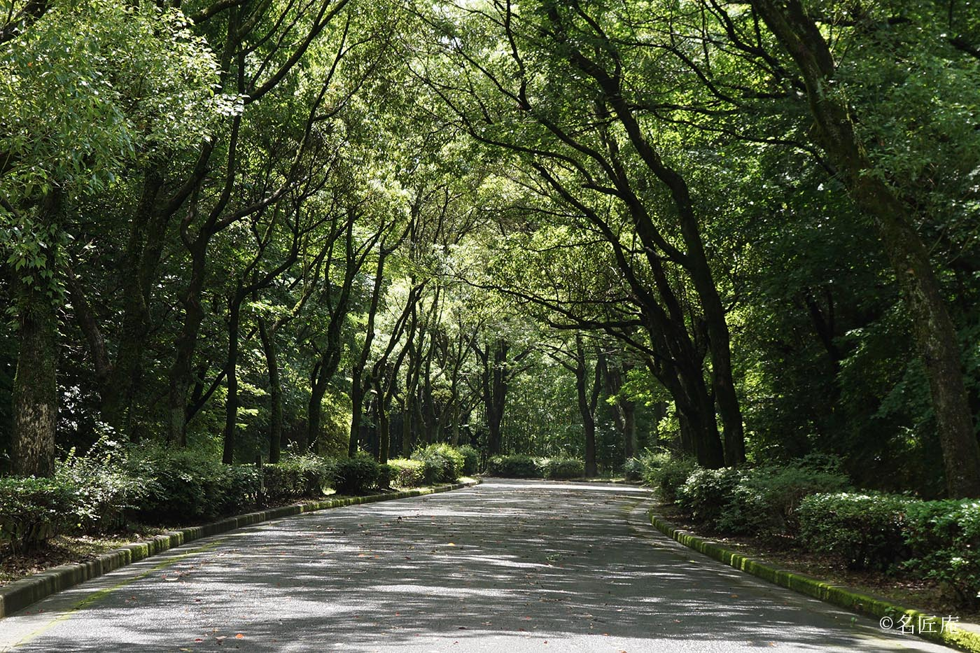 2016年 6月 名古屋 平和公園