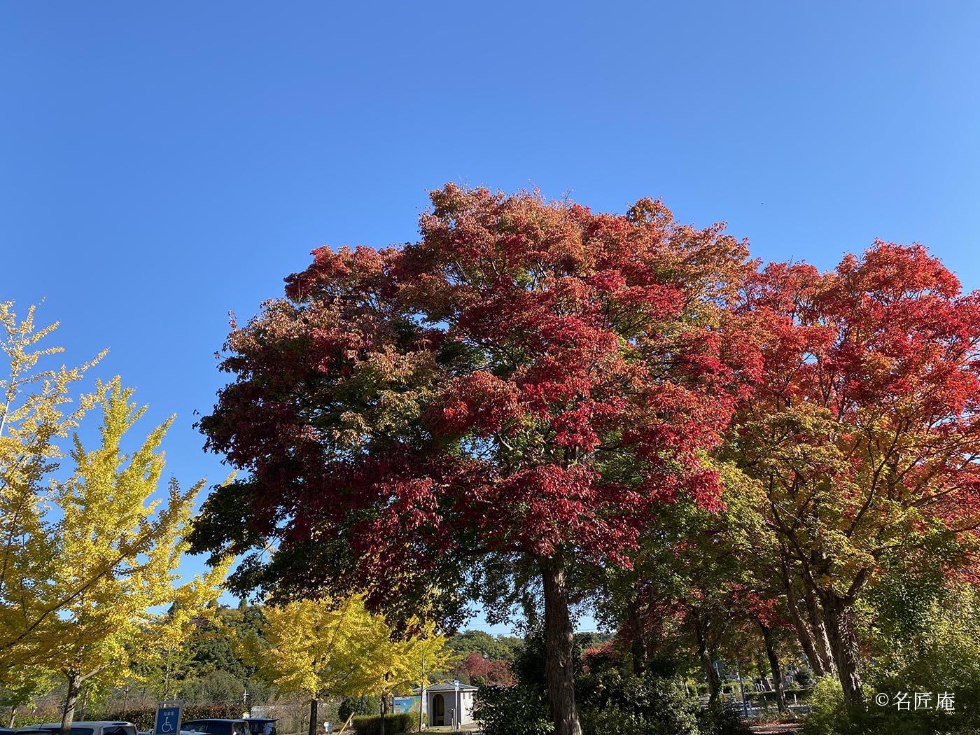 平和公園 紅葉