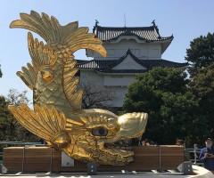 名古屋城 桜 金のシャチホコ